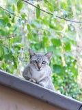 在屋顶的离群猫 免版税库存照片