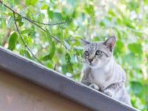 在屋顶的离群猫 免版税库存图片