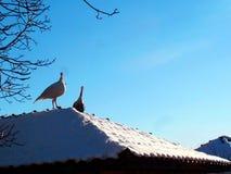 在屋顶的Turkies 免版税库存照片