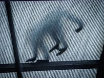 在屋顶视图的面无血色的连斗帽女大衣在哥斯达黎加附近 库存图片