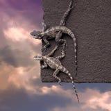 在屋顶边缘的两只蜥蜴 免版税库存照片