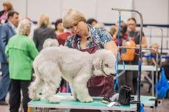 在展示的修饰狗 免版税库存照片