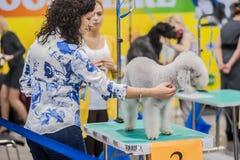 在展示的修饰狗 免版税图库摄影