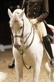 在展示马的马鞍的未认出的车手 免版税库存图片