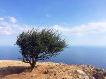 在山上面的偏僻的树 免版税库存图片