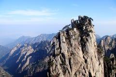 在山上面的树 免版税库存照片