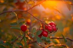 在山上面的秋天风景 库存图片