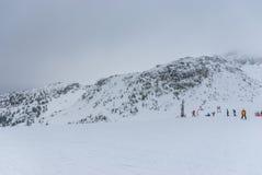 在山上面的积雪的树 免版税图库摄影