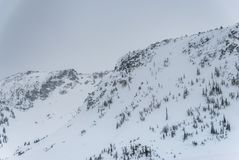 在山上面的积雪的树 免版税库存照片