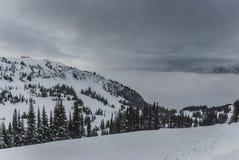 在山上面的积雪的树 免版税库存图片