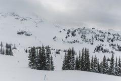 在山上面的积雪的树 库存图片
