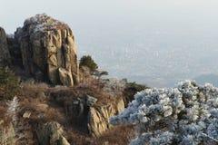 在山上面的降雪的树 免版税库存照片