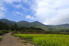在山下的油菜子领域 图库摄影