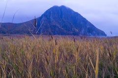 在山下的芦苇 免版税库存照片