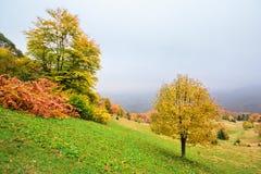 在山与草甸和五颜六色的树的美丽如画的秋天风景在前景和雾在谷上 免版税库存图片