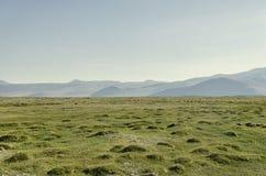 在山中的绿色平的草谷 免版税库存照片
