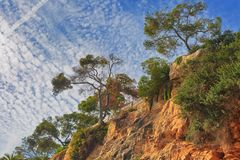 在山倾斜的树反对蓝天的 库存图片