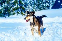 在山冬天风景的狗 背景夫妇查出的纵向配置文件空白年轻人 库存照片