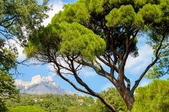 在山前面的树 免版税库存照片