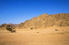 在山前面的沙漠 免版税库存照片