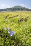 在山前面的花 免版税库存照片