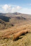 在山前面的高山灌木, Snowdonia国家公园 免版税库存图片