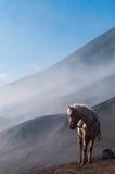 在山和蓝天前面的白马 库存照片