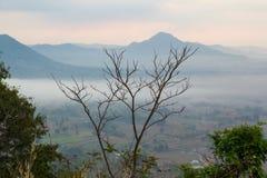 在山和薄雾背景的死的树 库存图片