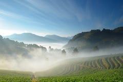 在山和雾之中的美丽的草莓农场和登山家 免版税库存图片