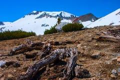 在山土坎的停止的结构树在拉森火山的公园。 图库摄影