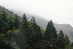 在山坡的冷杉木 免版税库存照片