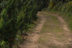在山坡的国家泥泞的路 免版税库存图片
