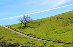 在山坡的孤立橡树与在足迹和云彩的对角线 库存照片