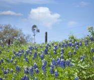 在山坡的得克萨斯矢车菊与风车在背景中 库存照片