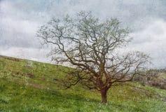在山坡的抽象孤立橡树与有污点的纹理 库存图片