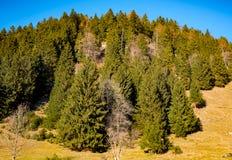 在山坡的树有蓝天背景 库存照片