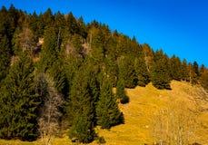 在山坡的树有蓝天背景 免版税图库摄影