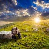 在山坡的石头中负担在日落 库存照片