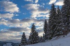 在山坡的积雪的云杉 库存图片