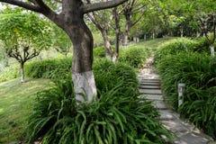 在山坡的被遮蔽的石楼梯在晴朗的夏天 免版税库存图片
