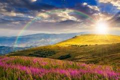 在山小山的野花在日落 库存图片