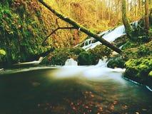 在山小河的秋季瀑布 泡沫似的水落在生苔冰砾和corful叶子 免版税库存照片