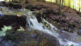 在山小河的黄色叶子 喀尔巴阡山脉的山顶视图 股票录像