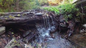 在山小河的黄色叶子 老注册清楚的水 影视素材