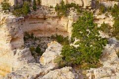 在山峭壁的一棵小杉木 免版税库存图片