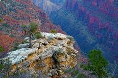 在山峭壁的一棵老树 免版税库存图片