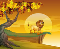 在山峭壁附近的一头狮子 免版税库存图片