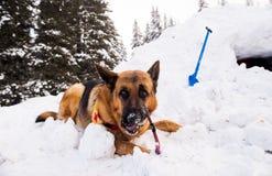 在山急救工作的抢救狗 免版税图库摄影