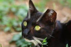 在山找到的绿眼的猫 免版税库存图片