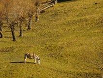 在山日出的驴 库存图片
